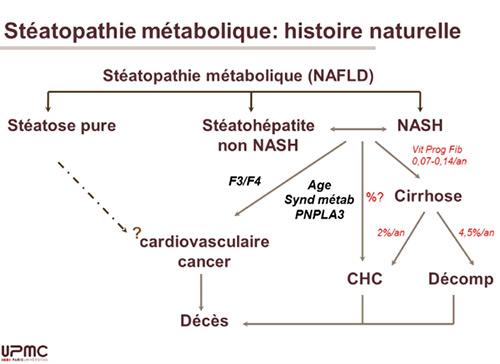 Stéatopathie métabolique : histoire naturelle