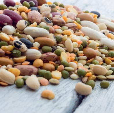 Quantité de fibres (en g) pour 100g de légumes secs
